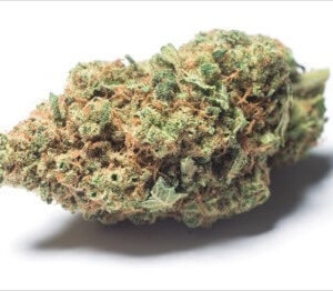 Buy ACDC Weed Strain